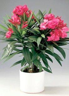 Какие комнатные цветы можно выращивать в спальне?