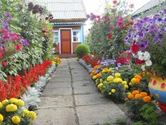 Растения весенних цветников и их названия (48 фото): какие цветы часто встречаются, несколько схем посадки