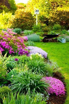 Клумбы для дачи и загородного дома: виды и их оформление