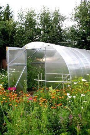 Теплица «Урожайная»: особенности, преимущества и размеры