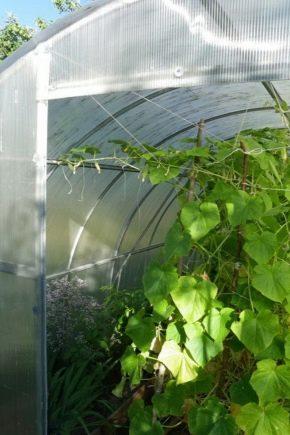 Парник для огурцов: виды и тонкости изготовления
