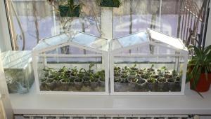 Парник для балкона