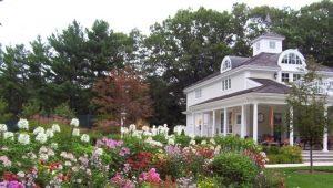Интересные идеи для дачного дома и огорода