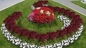 Ландшафтный дизайн: как выбрать цветы для клумбы?