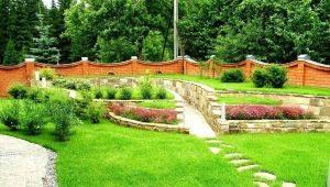 Рулонный газон: рекомендации по выбору и уходу