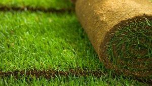 Устройство рулонного газона: особенности материала и технология укладки