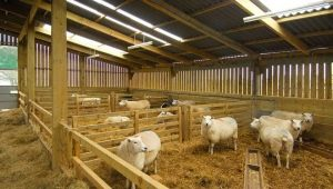 Какими бывают овчарни и как их строить?