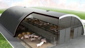 Разновидности и строительство свинарников