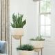 Комнатные растения в интерьере квартиры: интересные варианты оформления