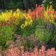 Ландшафтное проектирование: растения для осенних цветников