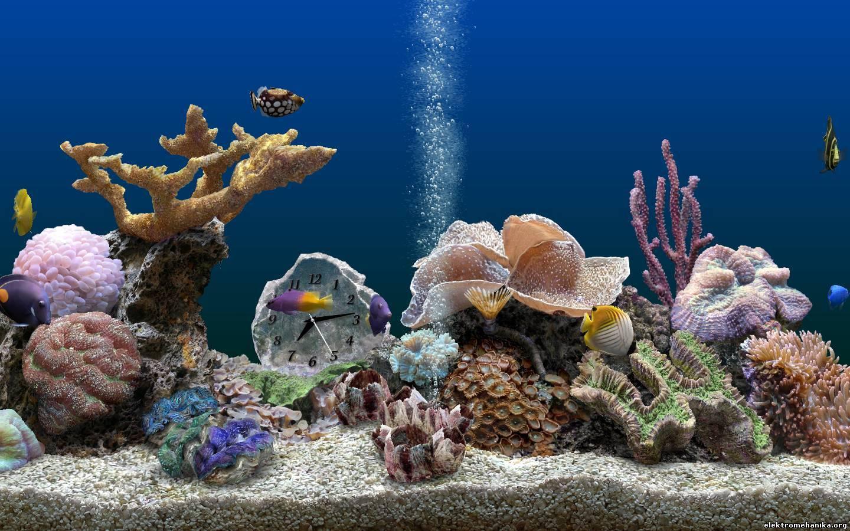 Аквариум рыбки картинки