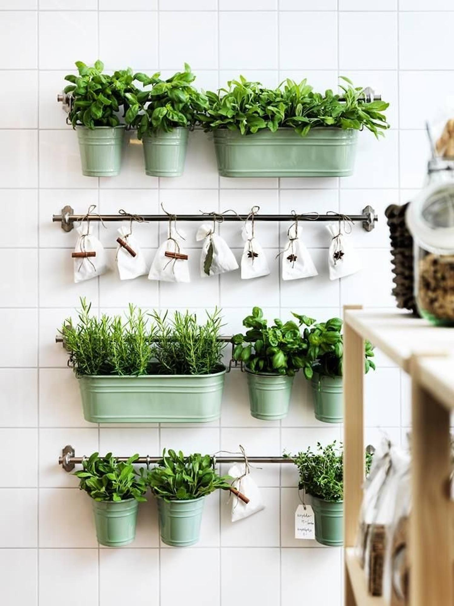 Какие цветы можно на кухне фото