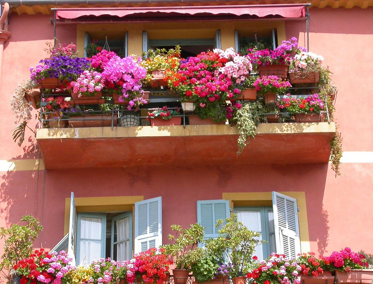 Цветы на балконе фото с названием