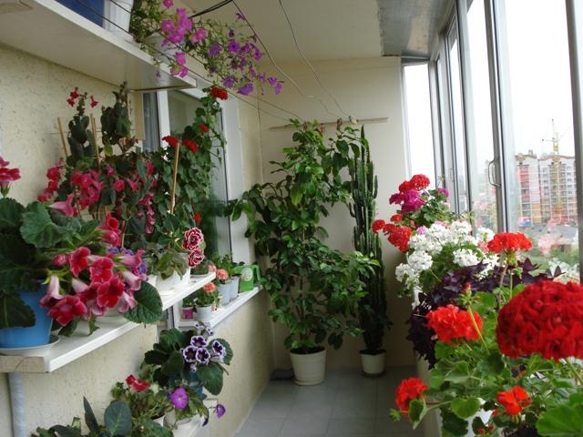 Шкаф на балкон - не дорого, быстро и удобно 9