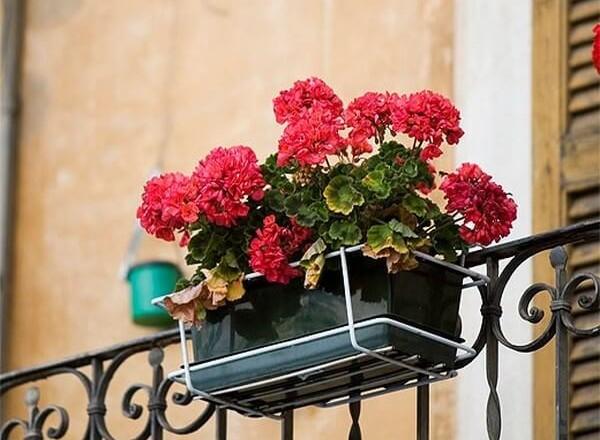 Цветы на балконе в ящиках - схемы посадки, фото и названия.