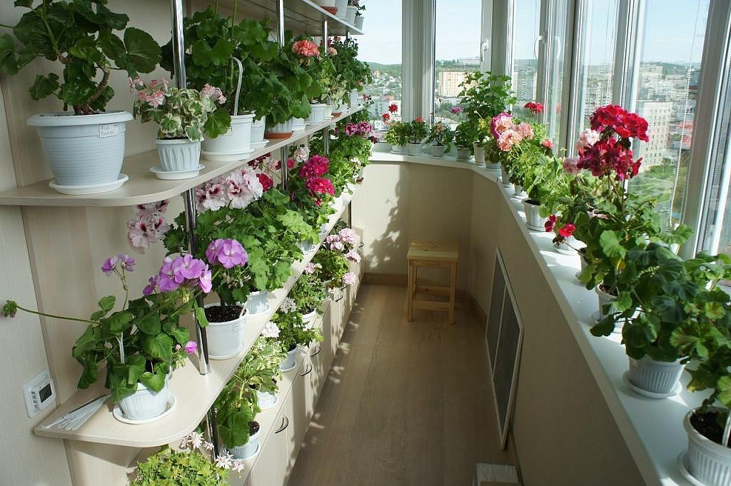 Как разместить цветы на лоджии