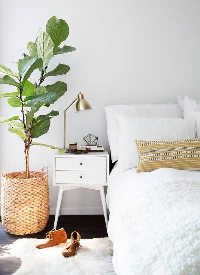 С мудростью выбираем растения для спальни