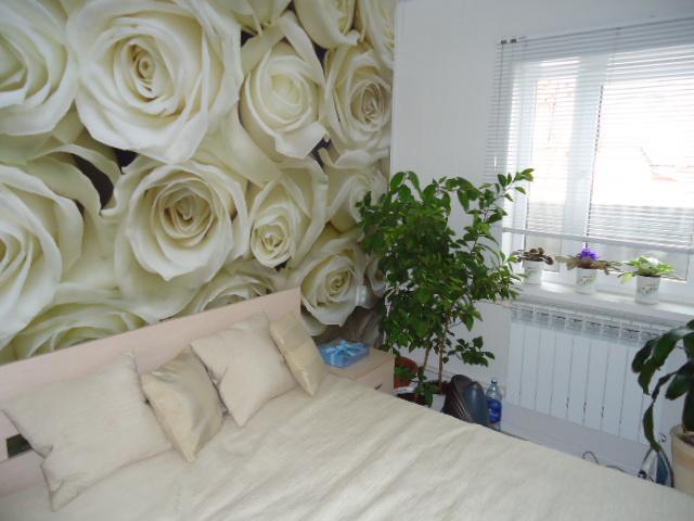 фото обои с розами