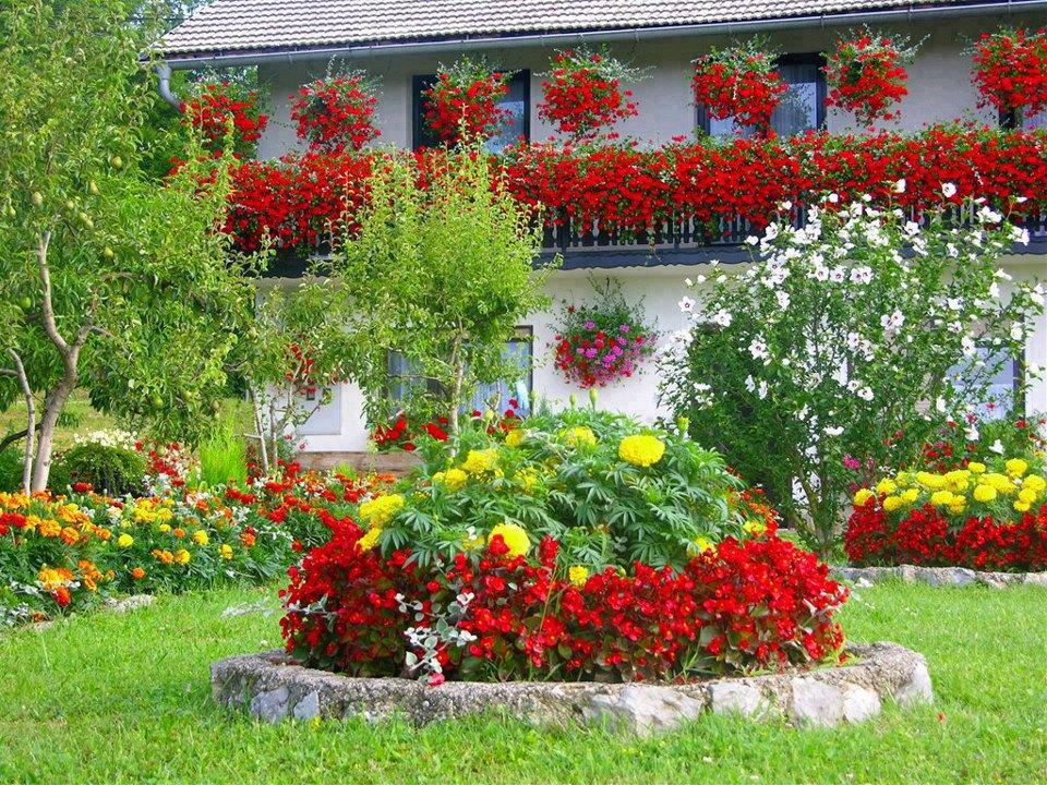 Клумбы своими руками на даче фото цветущее всё лето 12
