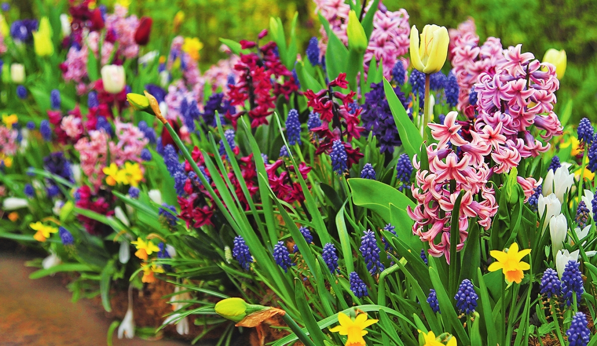 Цветы для высадки осенью