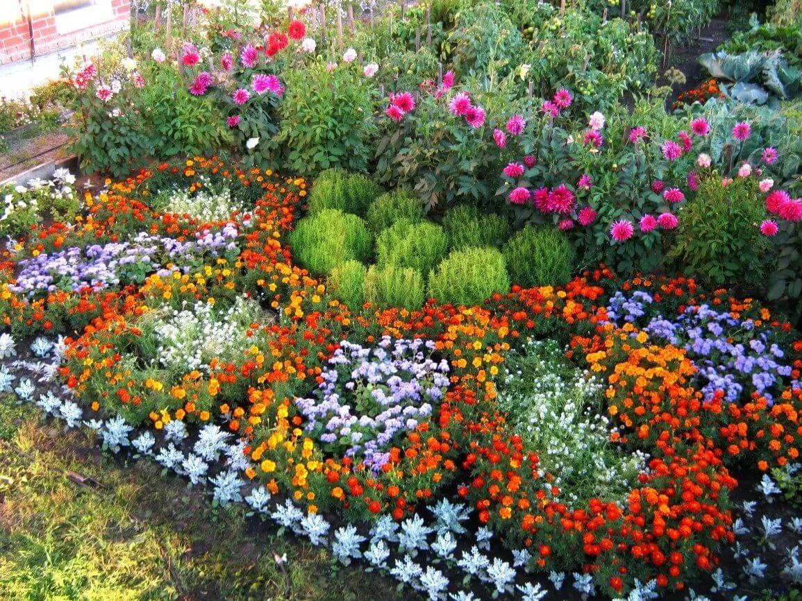 Рассада цветов для газонов 73