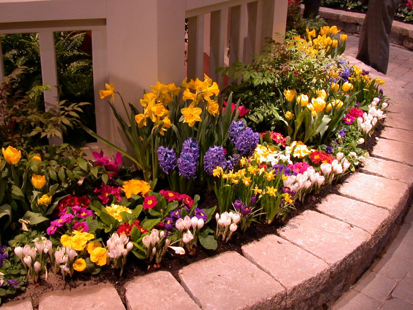 Когда лучше сажать цветы на клумбе 765