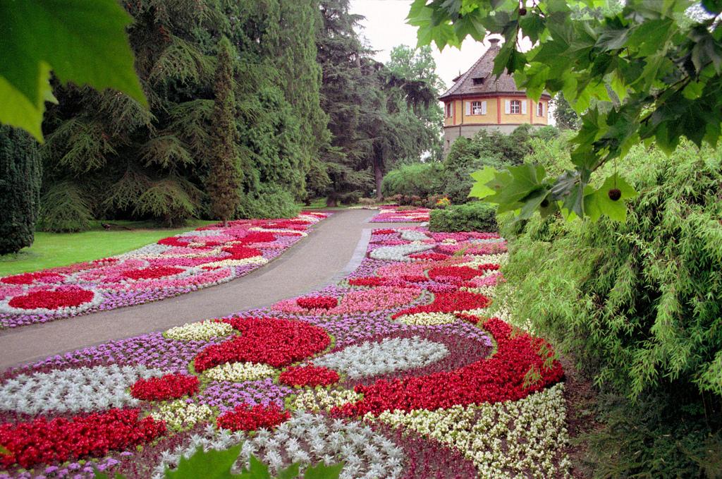 Гортензии и розы в ландшафтном дизайне
