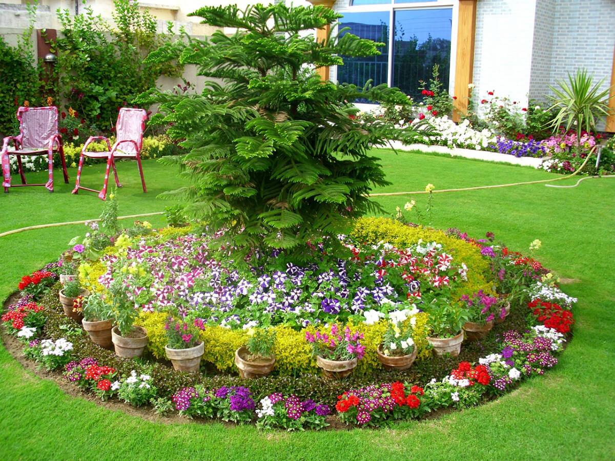 Красивые цветы на клумбе фото и название