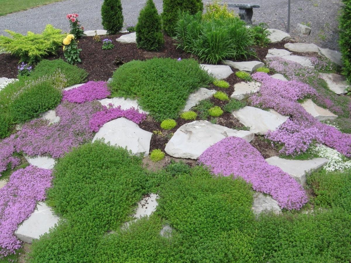 Многолетние цветы для альпийской горки с
