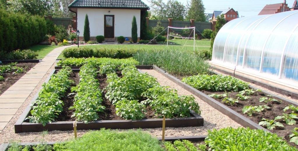 Огород своими руками планировка 14