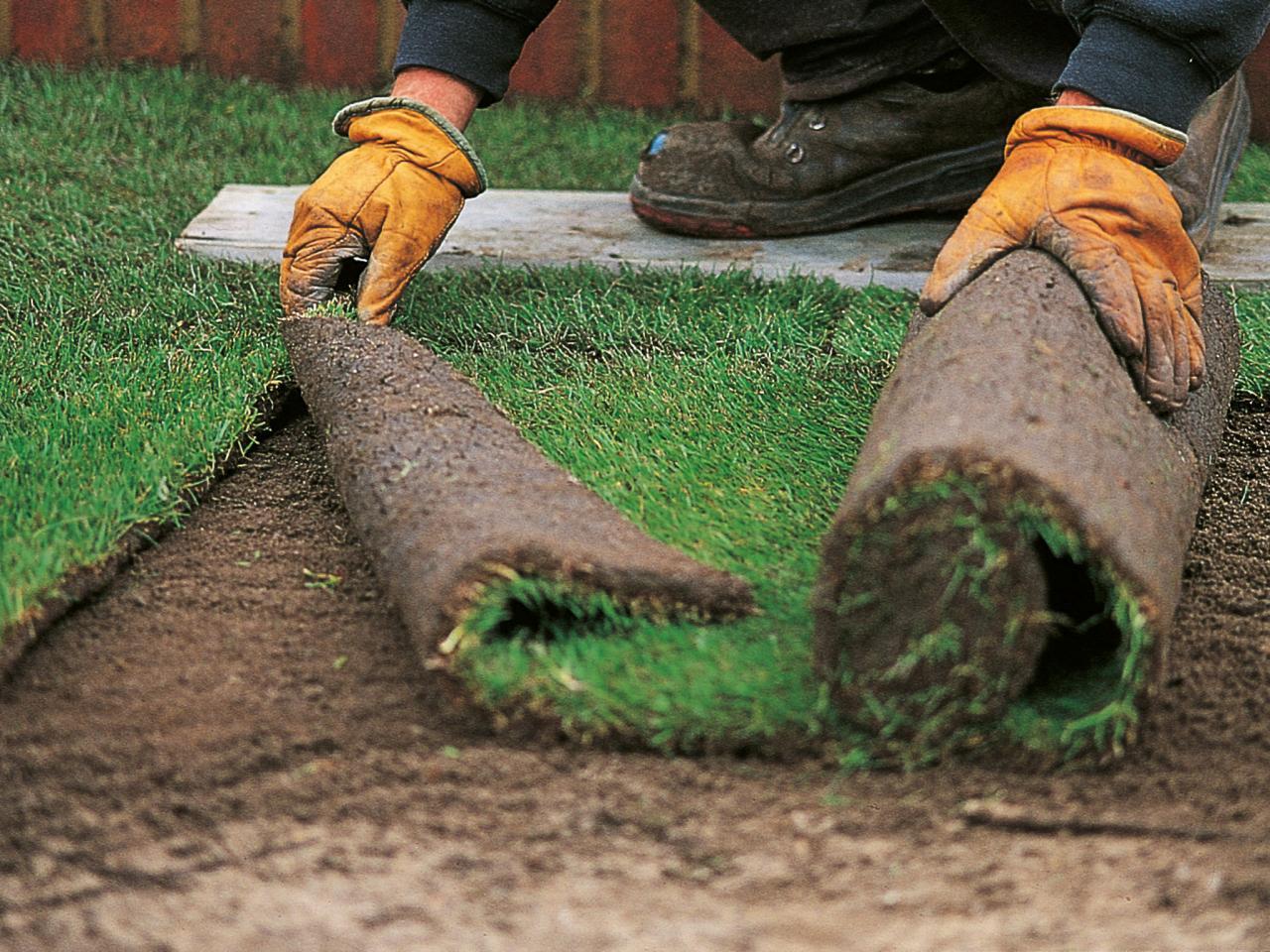 Садим газон пошаговая инструкция