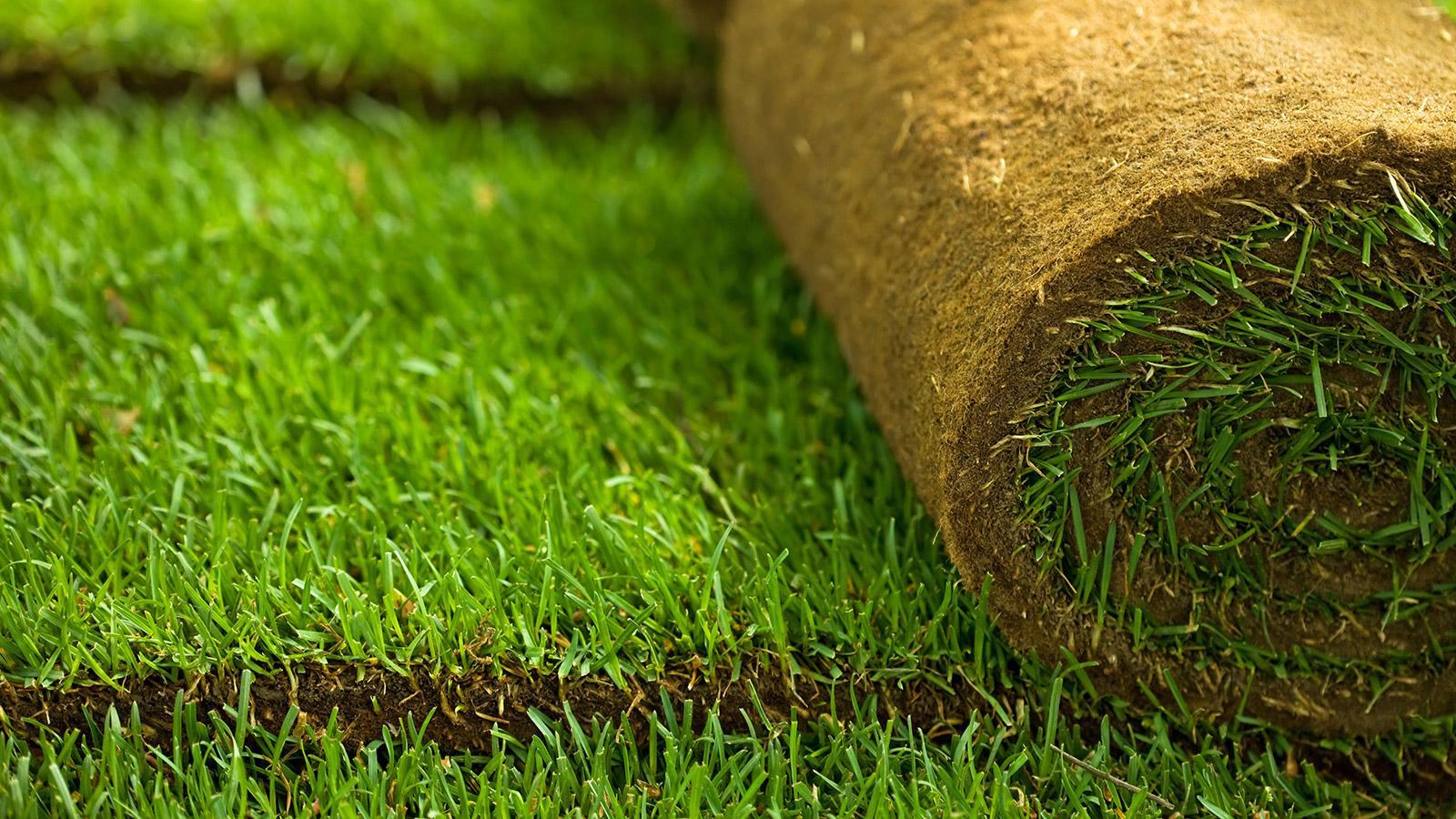 Рулонный газон - технология укладки как уложить как осуществлять подготовку земли и постелить устройство участка