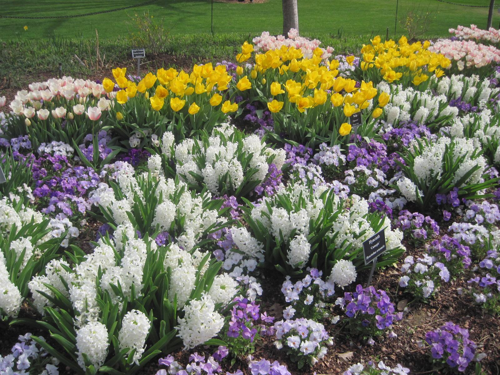 петуния какие цветы сажают весной на даче фото для